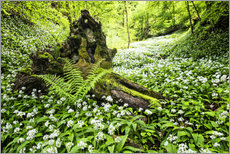 Fairy Forest with wild garlic