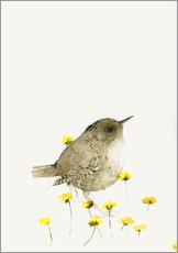 Wren and yellow flowers