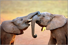 Two elephants interact gently with trunks