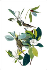 Two birds with magnolia