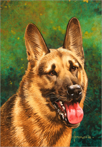 John Francis - 25984 German shepherd