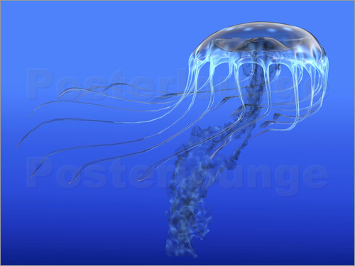 Corey Ford - A blue spotted jellyfish illustration.