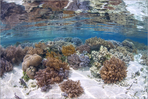 Ethan Daniels - A healthy and diverse coral reef grows in Raja Ampat, Indonesia.