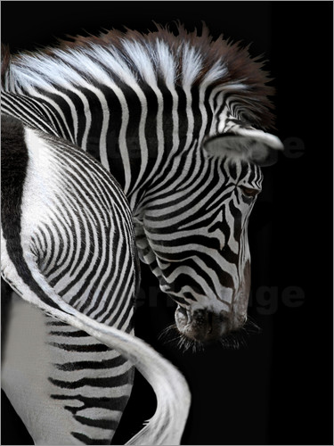 Poster african stripes II