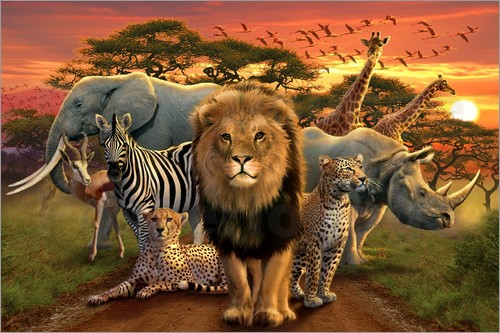 Poster African beasts