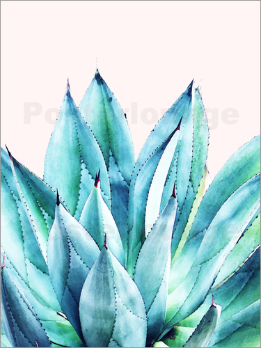 Poster Agave Watercolor