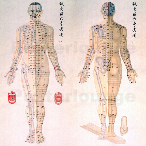 Acupuncture Map of the male body Poster | Posterlounge