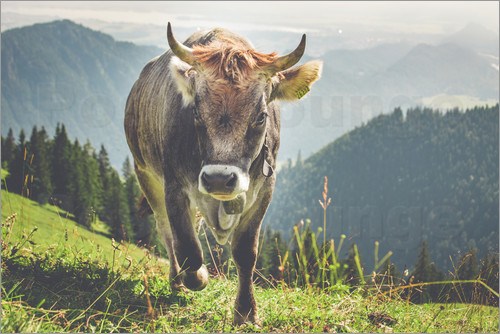 Michael Helmer - Cow in the Mountains