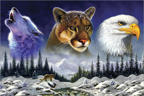 Poster American wildlife