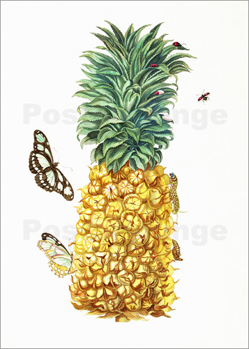 Poster pineapple