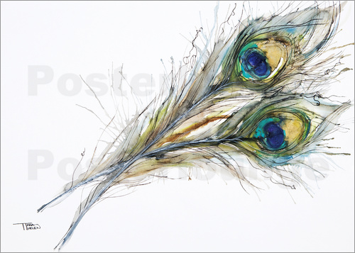 Poster Watercolor of two peacock feathers
