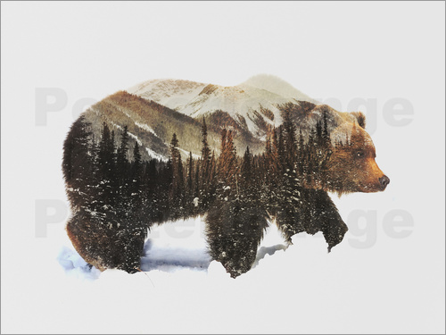 Poster Arctic Grizzly Bear
