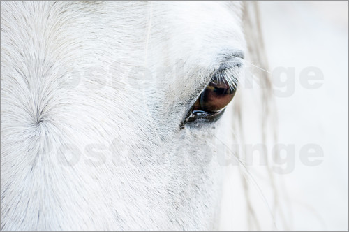 Poster Eye of the horse