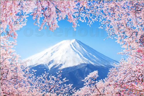 Poster Mount Fuji in Japan during the cherry blossom in spring