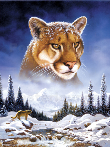 Poster Mountain lion