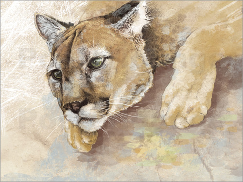 Poster Captived Mountain Lion