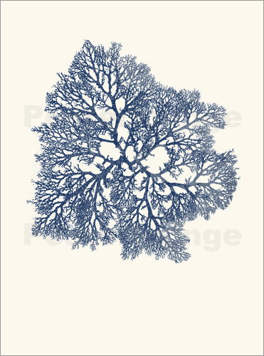 Poster navy coral 3