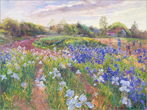Poster Field of flowers