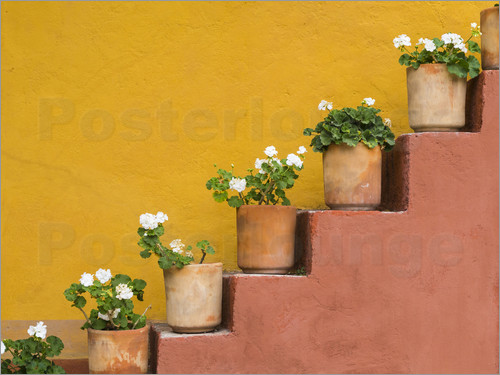 Don Paulson - Potted flowers on staircase