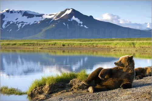 Paul Souders - Brown bear takes a rest
