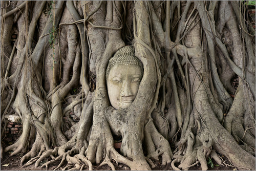 Buddha statue in the tree roots at Wat Mahathat
