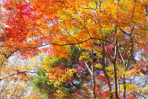 Jan Christopher Becke Colorful Autumn Leaves In The Forest Poster Posterlounge