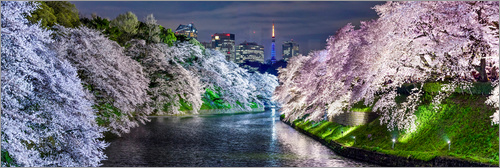 Poster Chidorigafuchi in Tokyo Japan in spring with cherry blossom