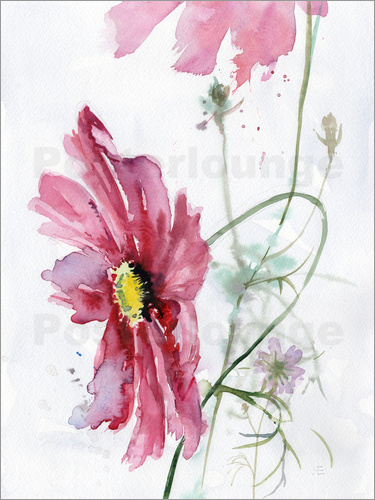 Verbrugge Watercolor - Cosmos flower watercolor