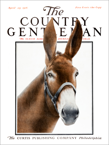 Poster Country Gentleman (donkey)