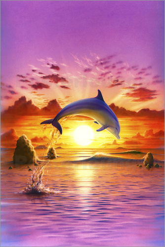 Poster Day of the dolphin - sunset