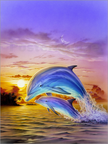 Poster Sunset dolphins