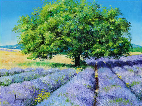 Poster Tree and Lavenders