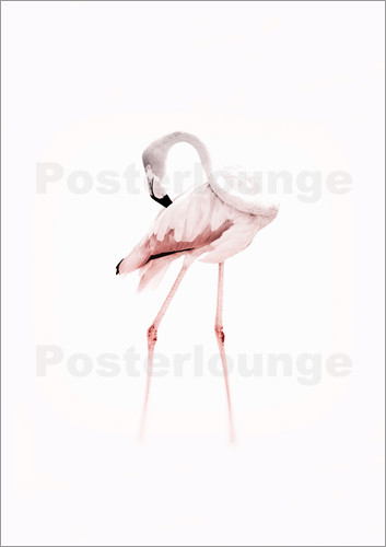 Poster The Flamingo