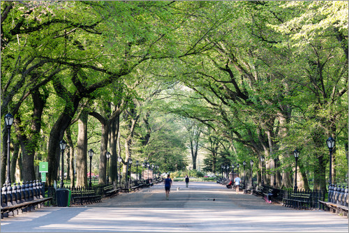Matteo Colombo - The Mall in spring, Central park, New York city, USA