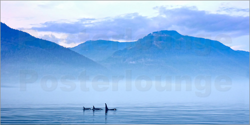 Jürgen Ritterbach - Three Killer whales in mountain landscape at Vancouver Island