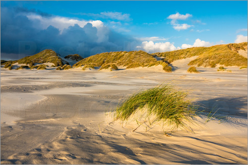 Poster Dunes on the island of Amrum, North Sea