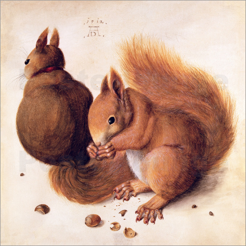 Poster Squirrels