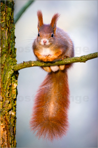 Squirrel sitting on the small branch