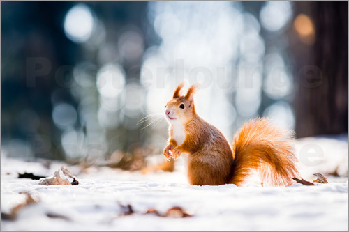 Squirrel looking for its nut