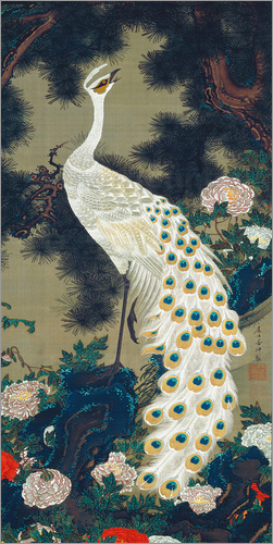 Poster A White Peacock under a Pine tree