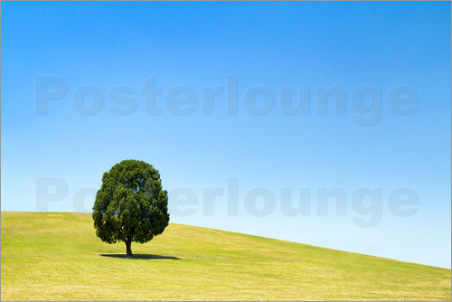 Jan Christopher Becke - Lonely tree on a green meadow