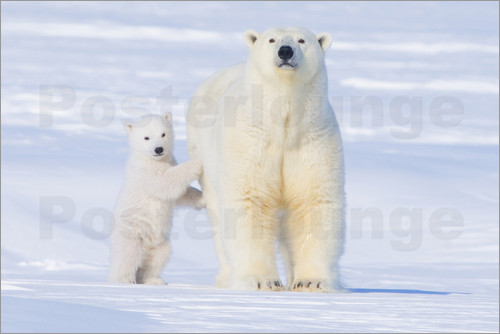 Steve Kazlowski - Polar bear family