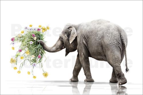 Werner Dreblow - Elephant with Flower