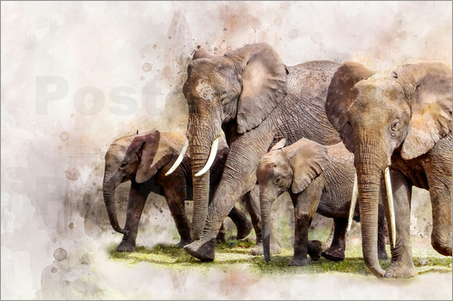 Peter Roder - elephants