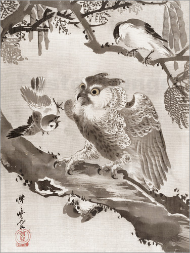 Poster Owl Mocked by Small Birds