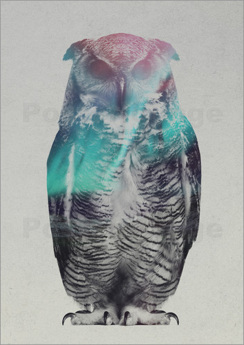 Poster Owl in the aurora borealis