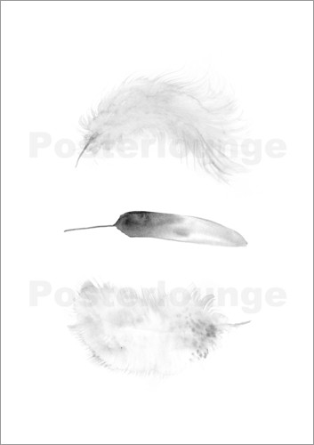 Poster Feathers