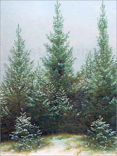 Poster Fir Trees in Snow