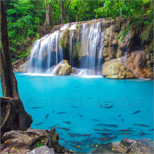 Fish in front of waterfall