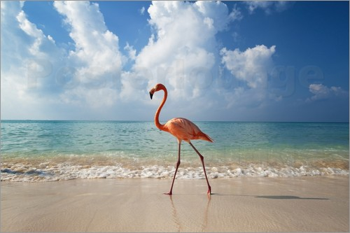 Poster Flamingo on the beach